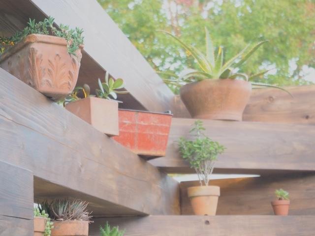 アロエと観葉植物