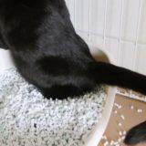 トイレ中の猫