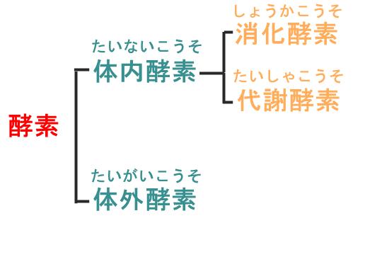 酵素の分類図