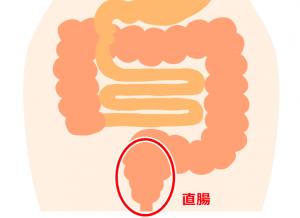 直腸イラスト