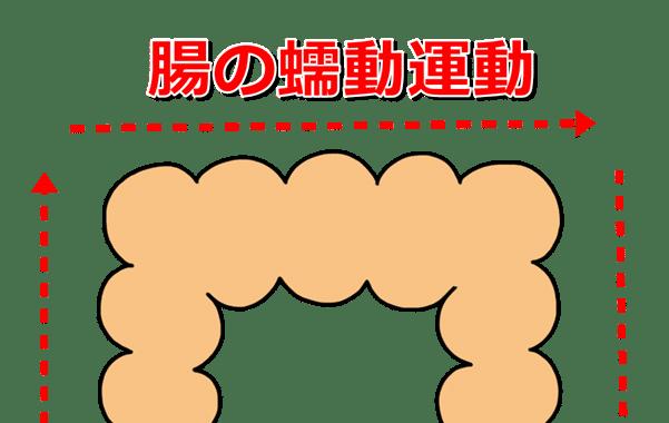 腸の蠕動運動イラスト